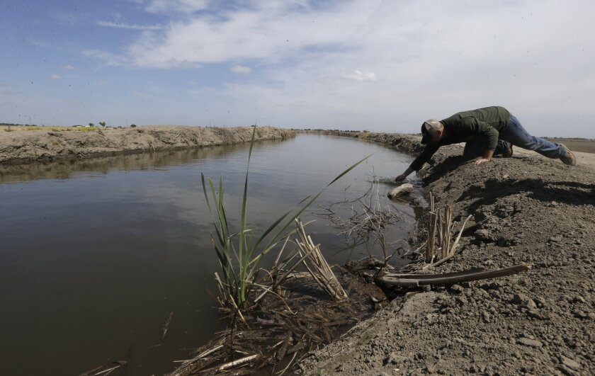 Gino Celli draws a water sample to check the salinity in an irrigation canal that runs through his fields near Stockton. Celli farms 1,500 acres of land and manages an additional 7,000 acres, has senior water rights and draws his irrigation water from the Sacramento-San Joaquin River Delta.