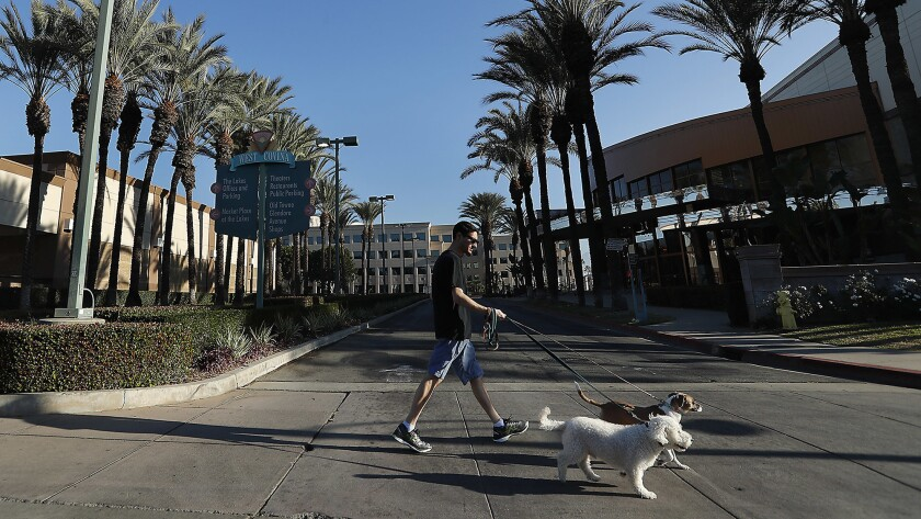 West Covina resident Russell Zenner walks his dogs Ralfie, foreground, and Honey along Lakes Drive.