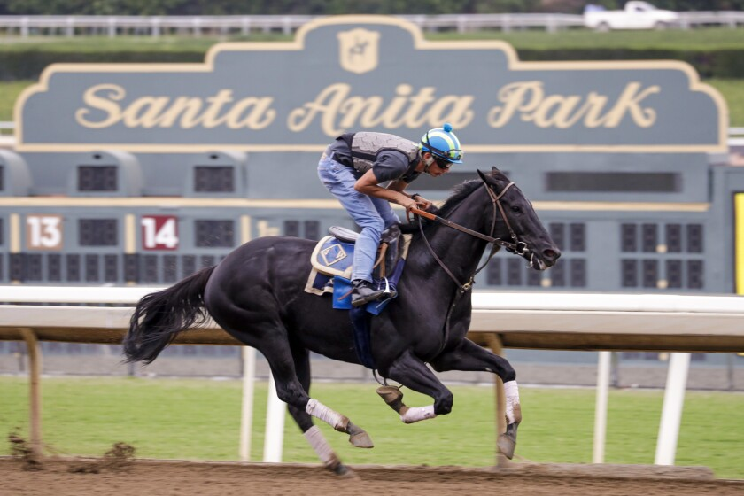 A horse takes part in a training exercise at Santa Anita Park.