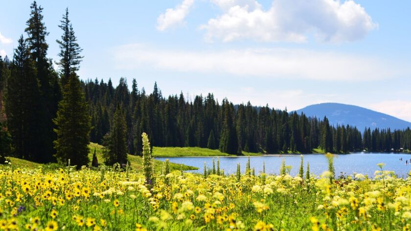 Photograph, paint and hike among wildflowers of all hues at the Crested Butte Wildflower Festival in
