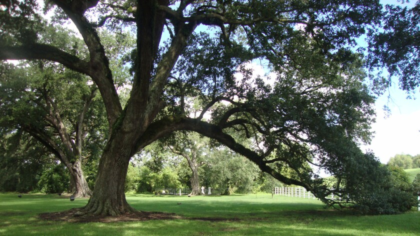 The grounds of the Nottoway Plantation evoke another era.