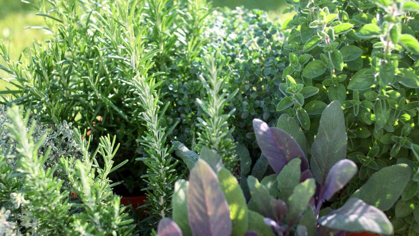 Fall is a good time to start an herb garden, with permanent herbs like rosemary, oregano and sage. Wait until spring for basil, though.
