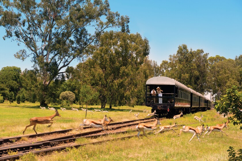 Travelers can experience wildlife up close as they ride the Pride of Africa.