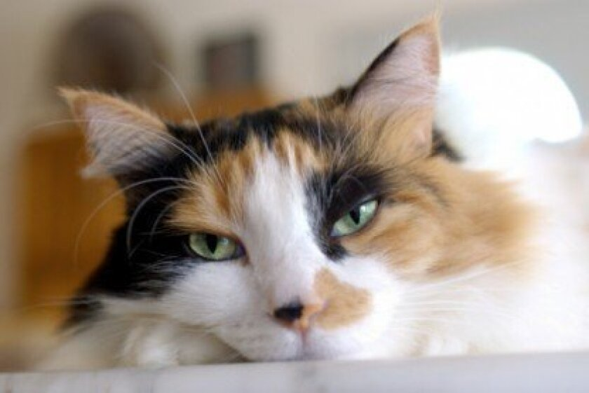 Cat veterinarian in La Jolla
