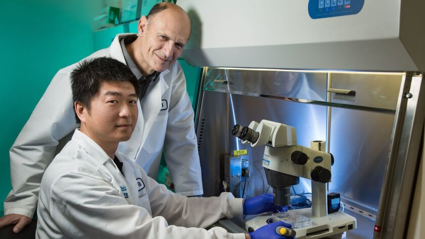 Jun Wu, a staff scientist from the Salk Institute, is the first author and Juan Carlos Izpisua Belmonte, a Salk Professor, is the senior author of the new Cell paper