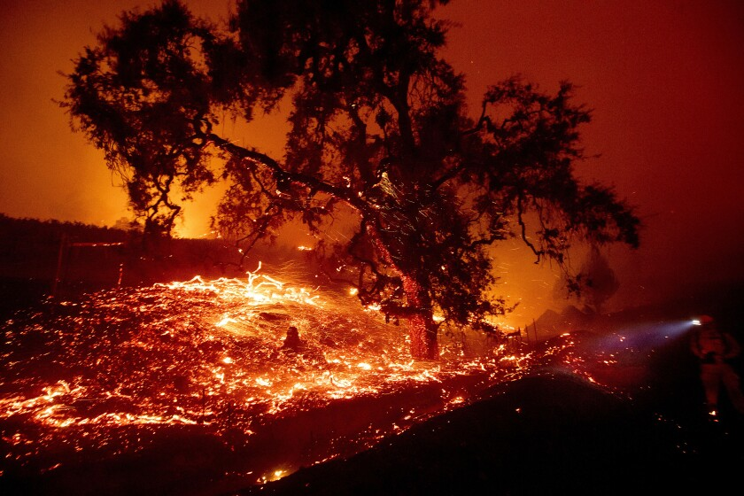 Embers fly from a tree as the Kincade Fire burns near the town of Geyserville on Oct. 24.