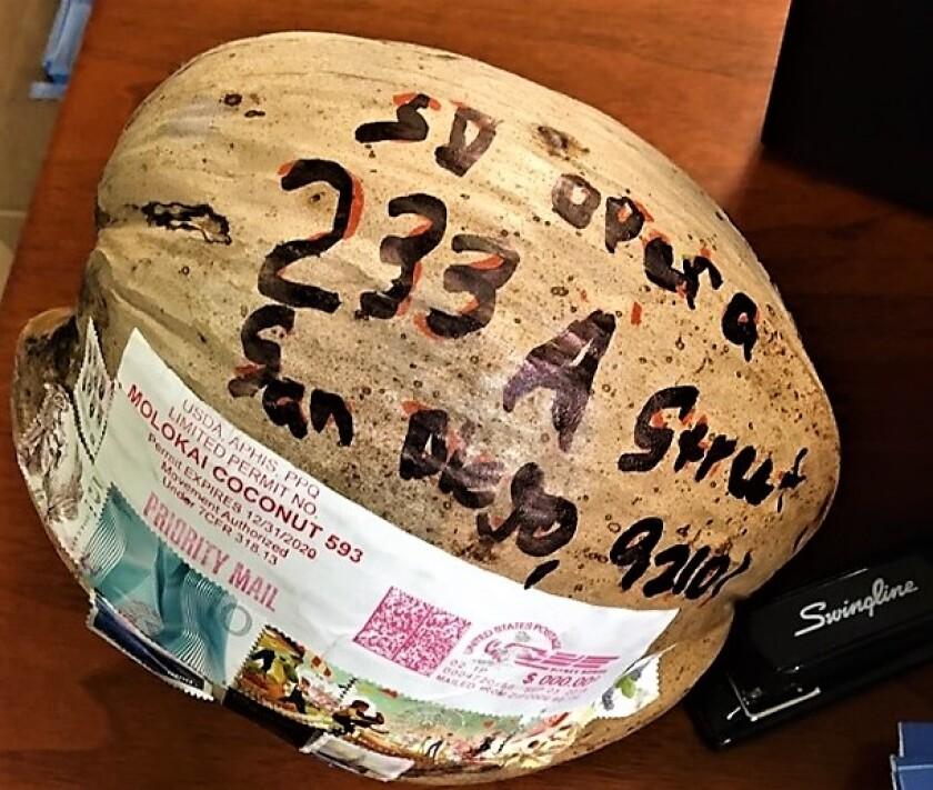 coconut (2).jpg
