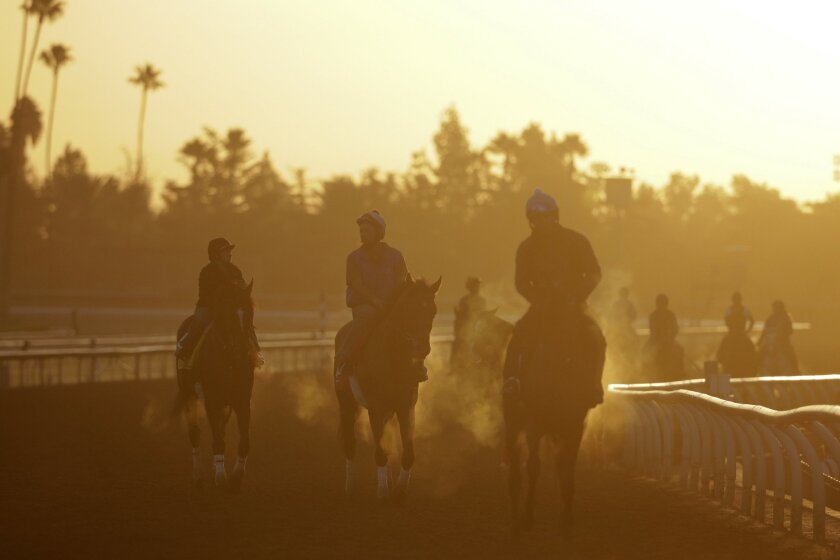 Exercise riders and horses walk along the track during morning workouts for the Breeders' Cup races at Santa Anita Park Tuesday, Oct. 28, 2014, in Arcadia, Calif. (AP Photo/Jae C. Hong)
