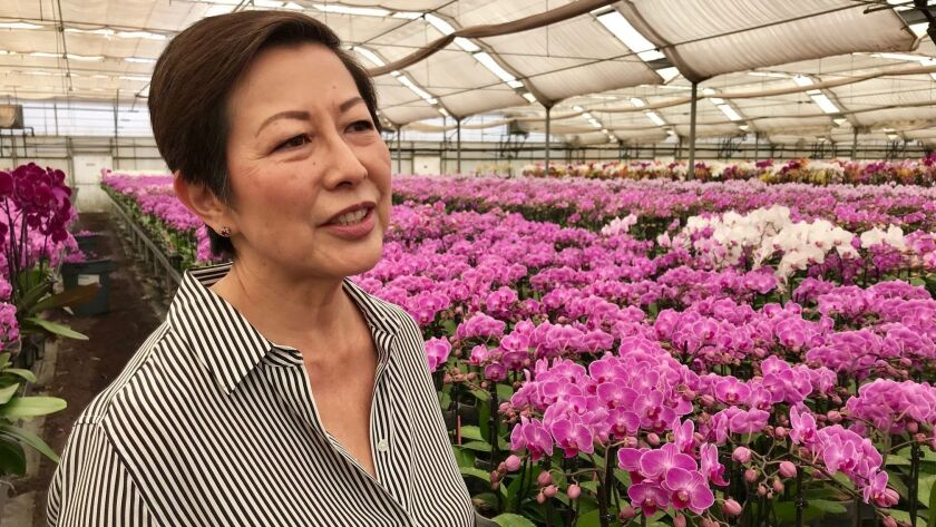 Theresa Matsui at her family orchid farm in Salinas.