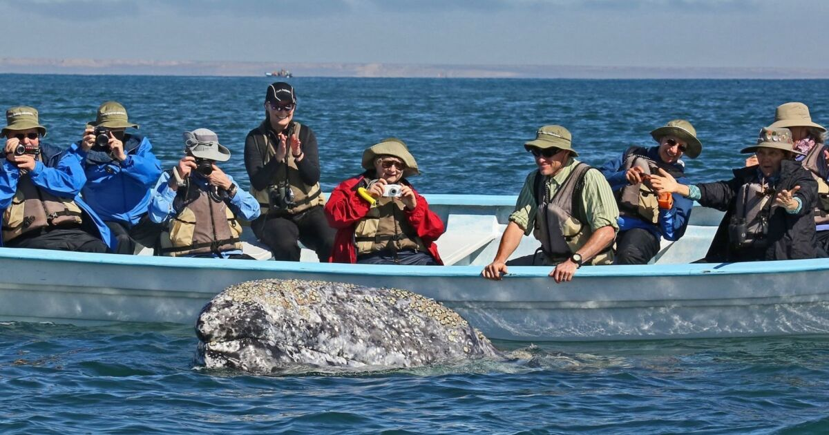 Have a close encounter with gray whales in a lagoon in Baja, Mexico