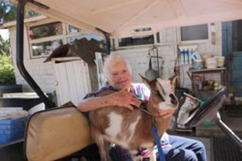 Jennie Collins with one of her Nigerian goats, Bebe.