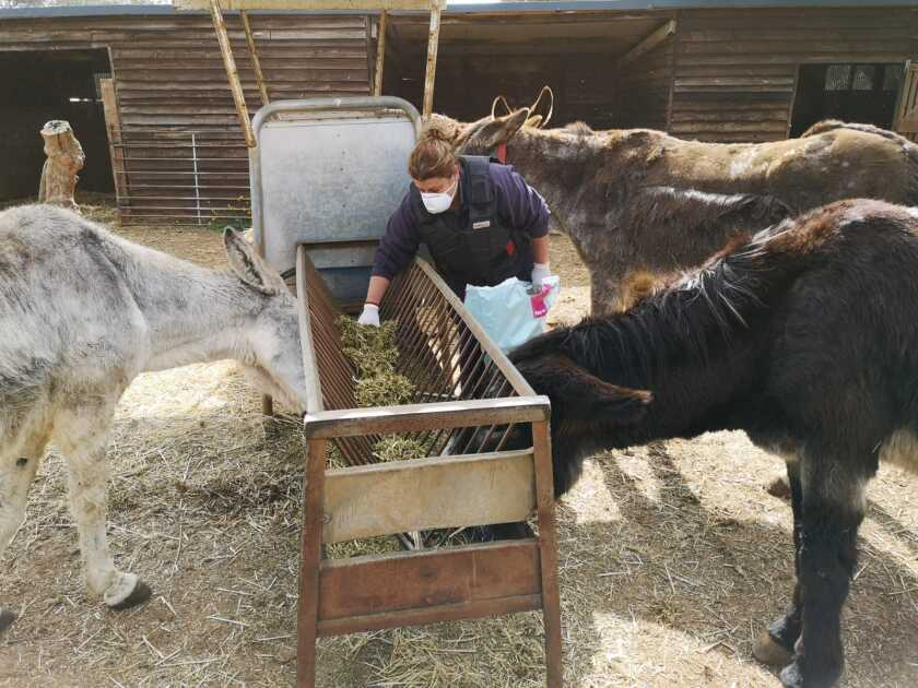 El Refugio del Burrito in Malaga, Spain, is seeing an increase in abandoned animals as owners become sick or die from COVID-19.