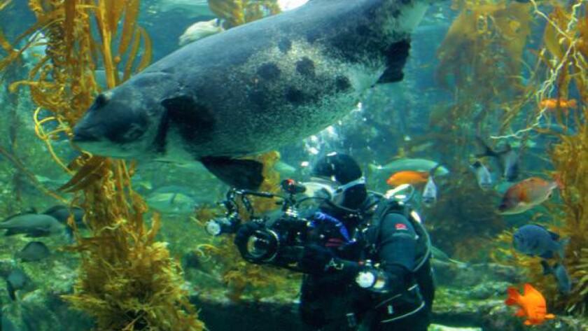 A scene from a past Scripps SEA Days event at Birch Aquarium