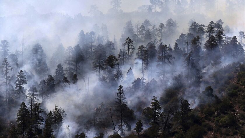 Smoke rises from a stand of trees smoldering from the 416 Fire west of U.S. Highway 550 on Friday, J