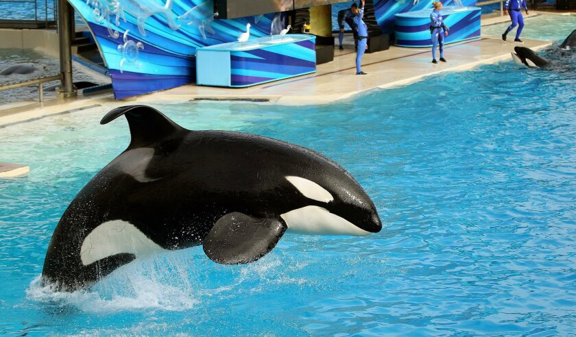 SeaWorld prevails in its effort to dismiss a lawsuit filed by theme park visitors claiming the parks' killer whales are mistreated.
