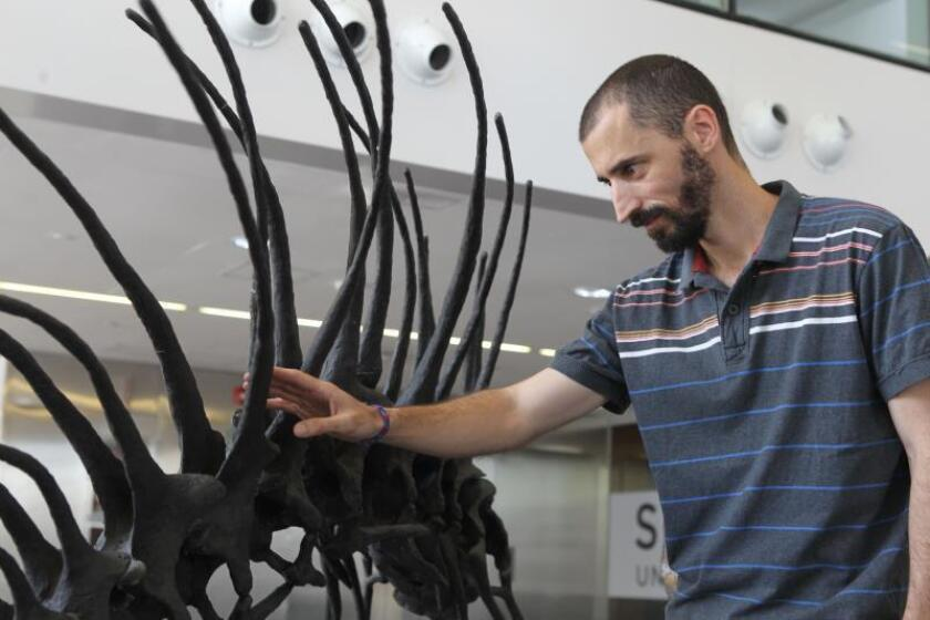 Paleontologist Pablo Gallina poses next to mock-ups of 'Bajadasaurus pronuspinax', a new kind of dinosaur whose fossils were discovered in Patagonia, at the Cultural Science Center in Buenos Aires, Argentina, 04 February 2019. EFE-EPA/ Tono Gil