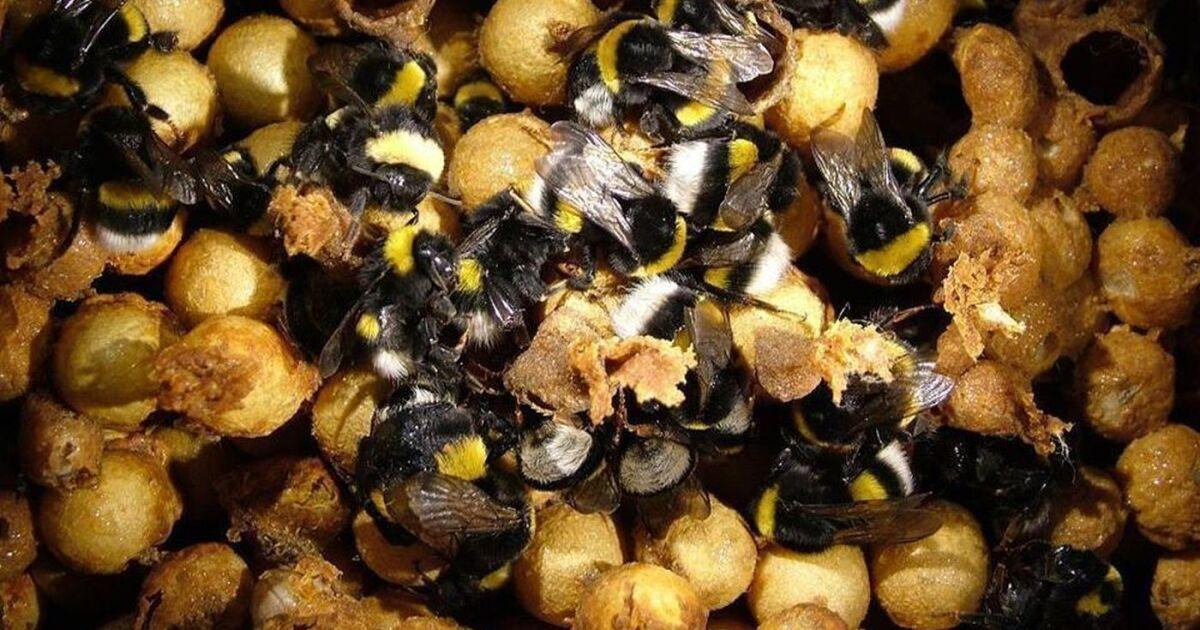Dónde viven las abejas terrestres
