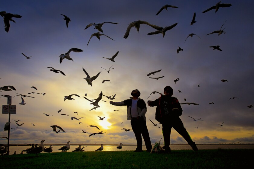A father and son feed the seagulls at Chula Vista Bayfront Park in this 2019 file photo.