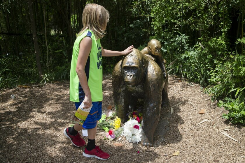 A child touches the head of a gorilla statue where flowers have been placed outside the Gorilla World exhibit at the Cincinnati Zoo & Botanical Garden, Sunday, May 29, 2016, in Cincinnati. On Saturday, a special zoo response team shot and killed Harambe, a 17-year-old gorilla, that grabbed and drag