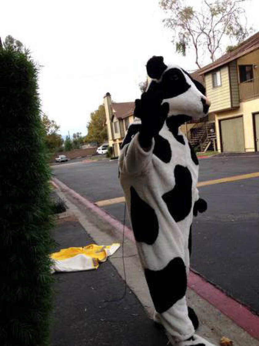 Police say suspect Robert Michael Trytten stole two cow costumes from Chick-Fil-A and then advertised them on Craigslist with this photo.