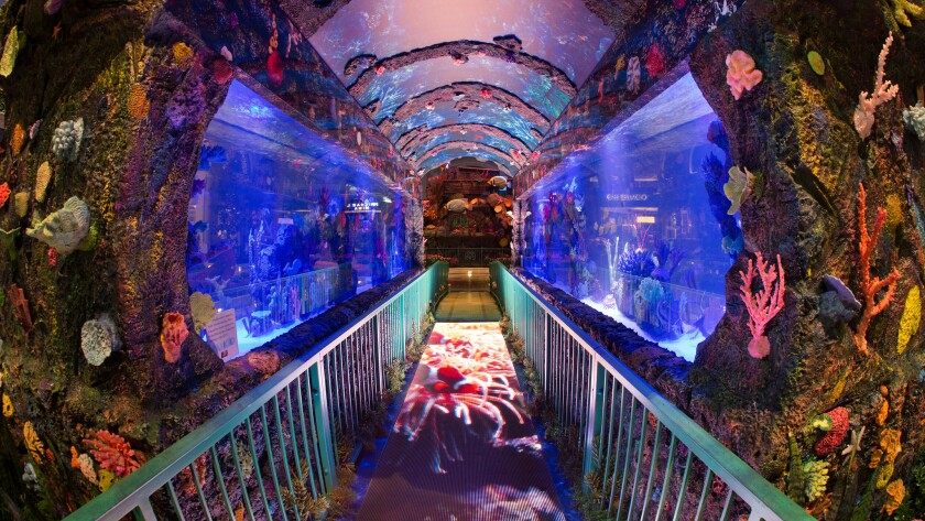 Summer visitors to the Bellagio Conservatory & Botanical Gardens enter a magical undersea world, crafted with 80,000 flowers,