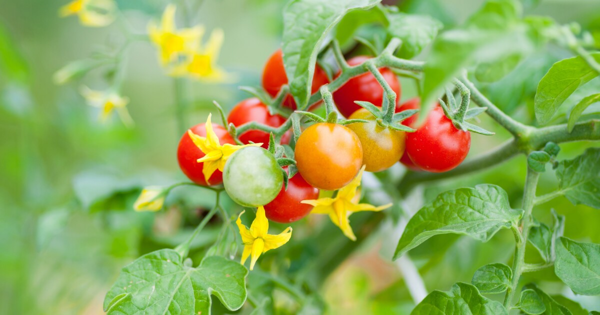 June chores for home gardeners