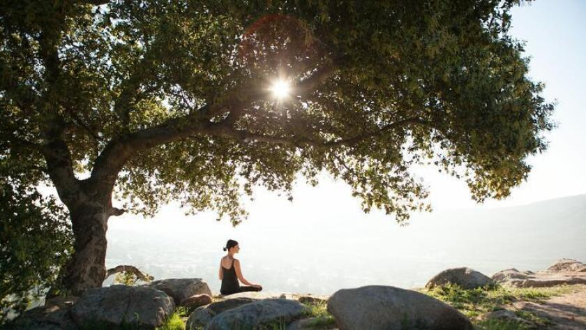 Fitness and wellness offerings at Rancho La Puerta are served every hour on the hour with a variety of choices ranging from yoga, Pilates, mountain hikes and meditation to ab conditioning, ropes courses or napping in a hammock. (/ Rancho La Puerta)