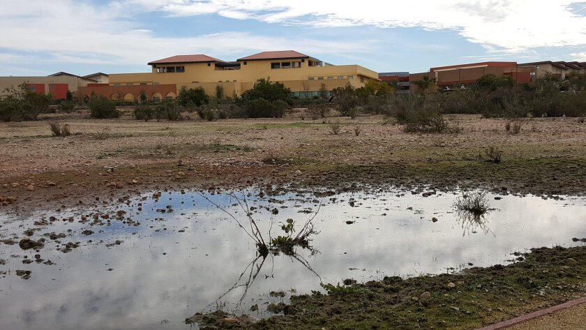Vernal pools, temporary ecosystems that appear after rains, are protected at Miramar College with a new fenced-in trail system  Photo courtesy San Diego Community College District.