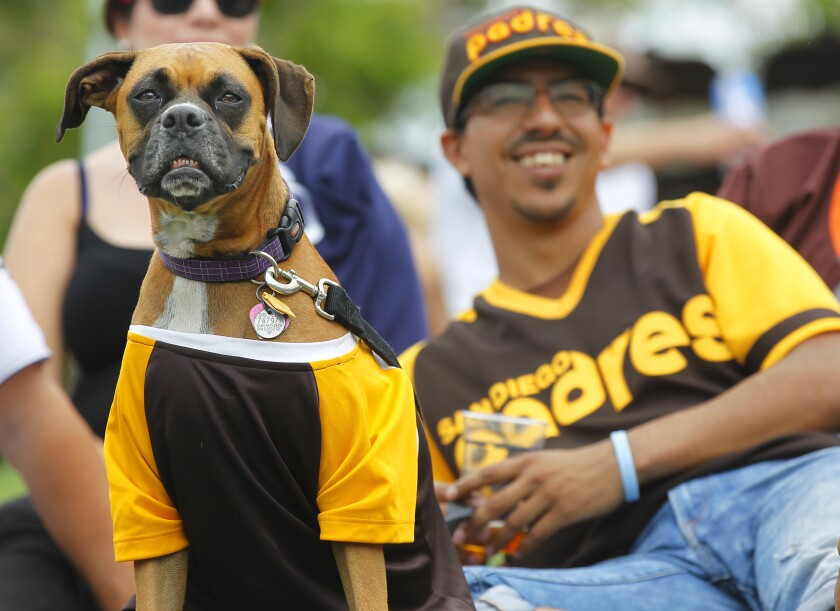 During Dog Days of Summer at Petco Park, a lottery-style registration process allows 500 pet owners to bring their dog to a baseball game.
