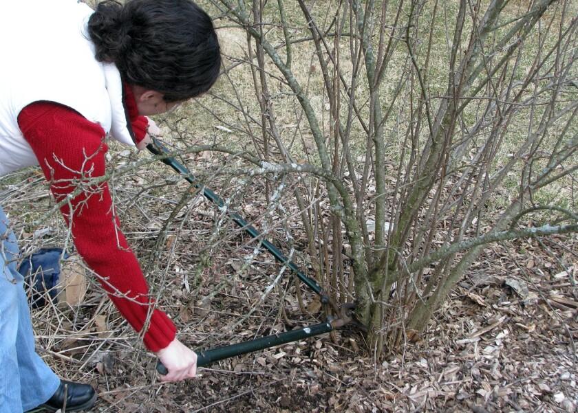 Gardening Pruning Shrubs