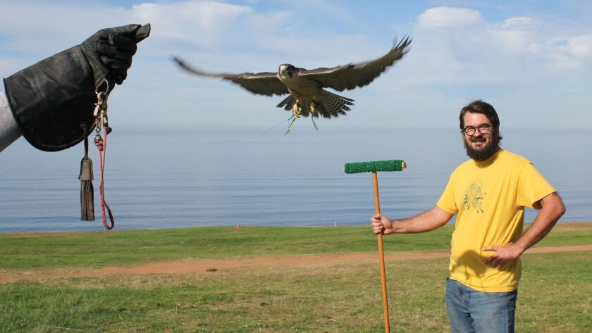 Volunteer Miles Jones holds the perch while Bunco the Lanner Falcon, flies over to the hand of his trainer.