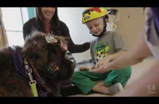 Watch a pet therapy dog at work