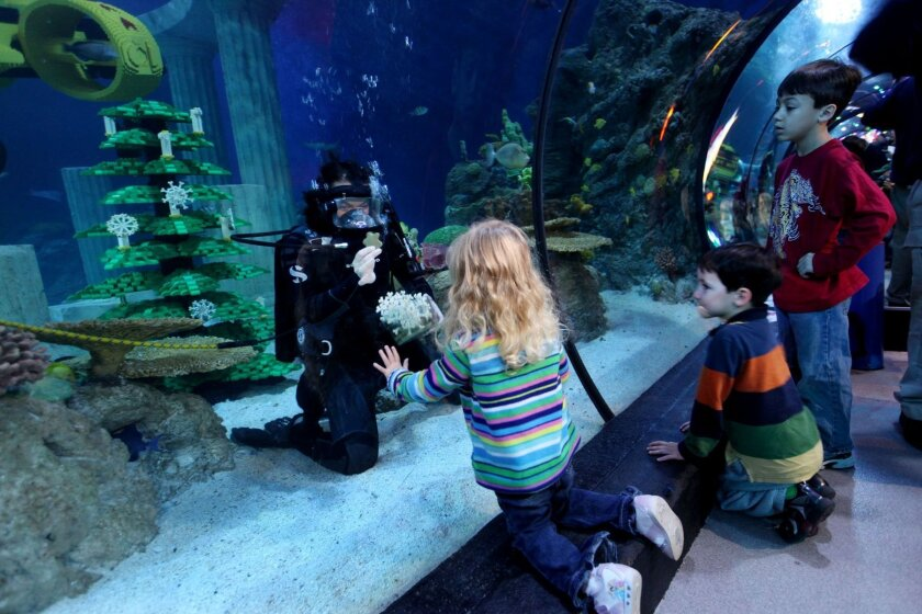 And you thought decorating your Christmas tree was tough. Here, a diver decorates a tree at Sea Life's Aquarium.