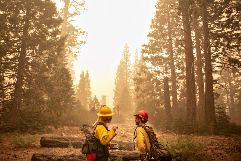 Two firefighters wearing gear stand in a clearing in a forest.