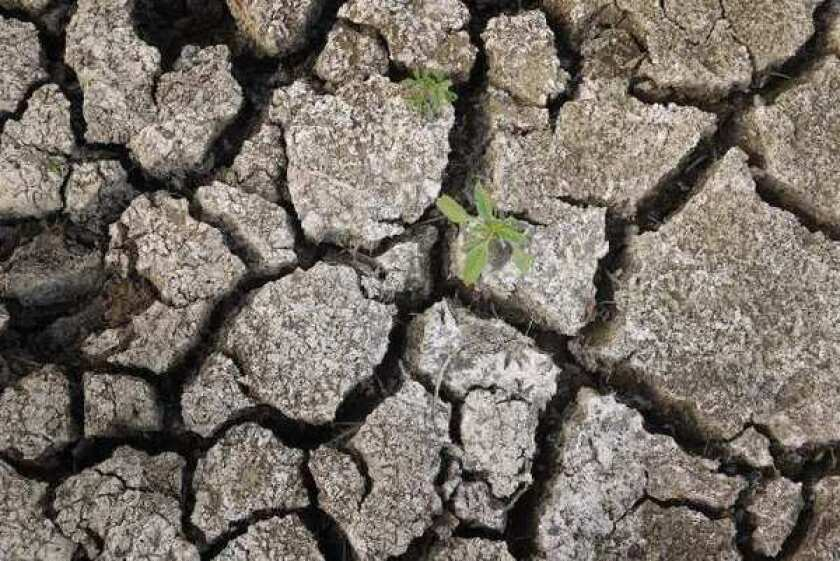 Parched ground at an Illinois cattle lot this year. Researchers report that many Generation X members seem unconcerned about climate change.