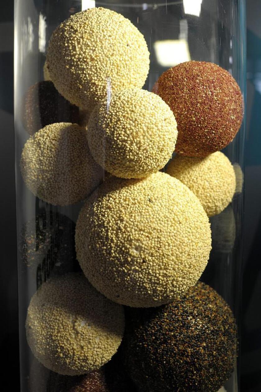 Bocaditos de quinua son exhibidos durante la presentación de un recetario a base de este producto. EFE/Archivo