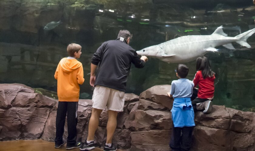 Family enjoying the fish.