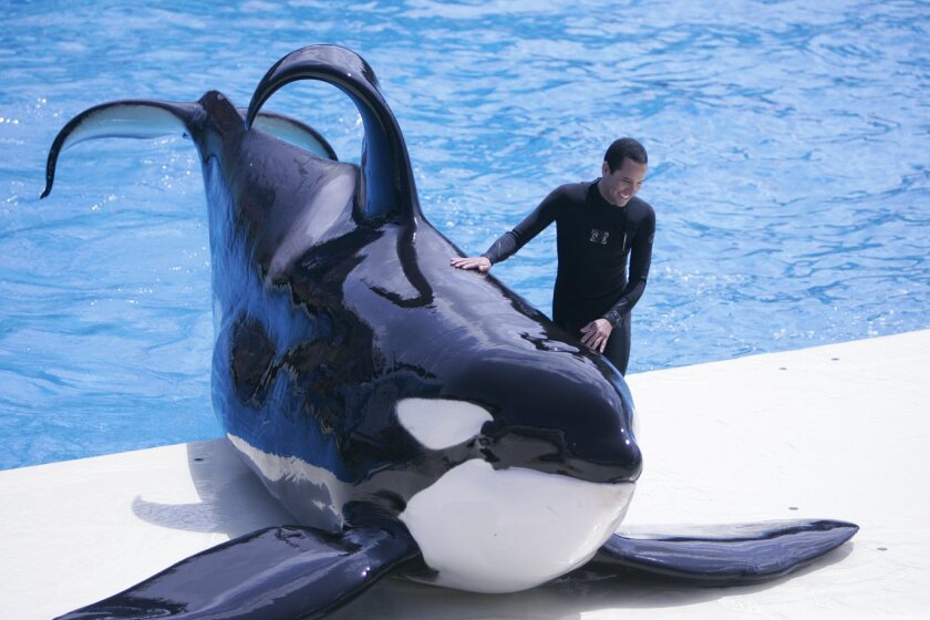 SeaWorld trainers are currently prohibited from getting in the water with the killer whales during the Shamu shows.