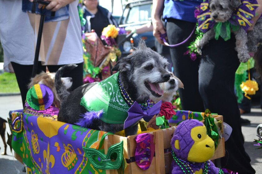 Doggie Gras 5K & Parade