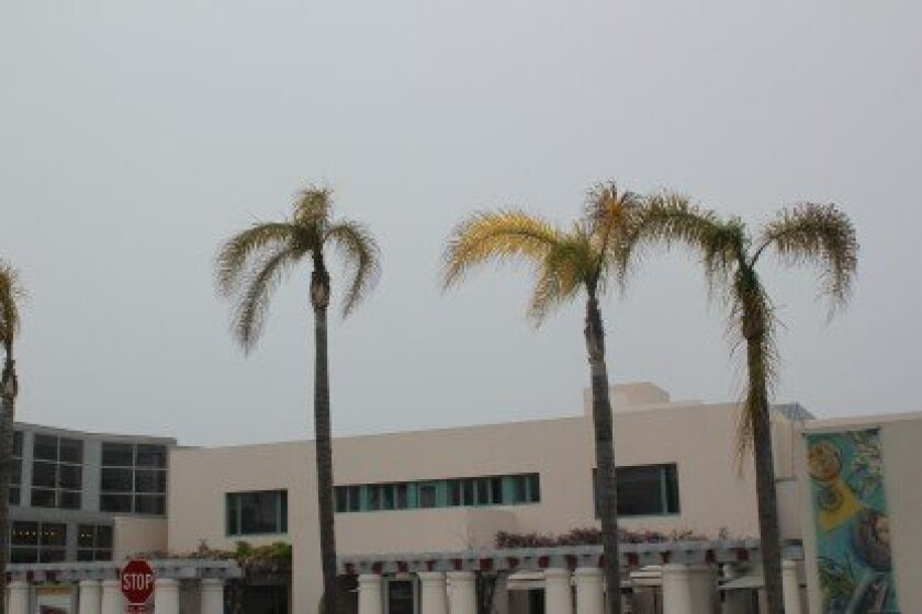 Three of nine palm trees in distress at the museum of contemporary art on Prospect Street. Pat Sherman