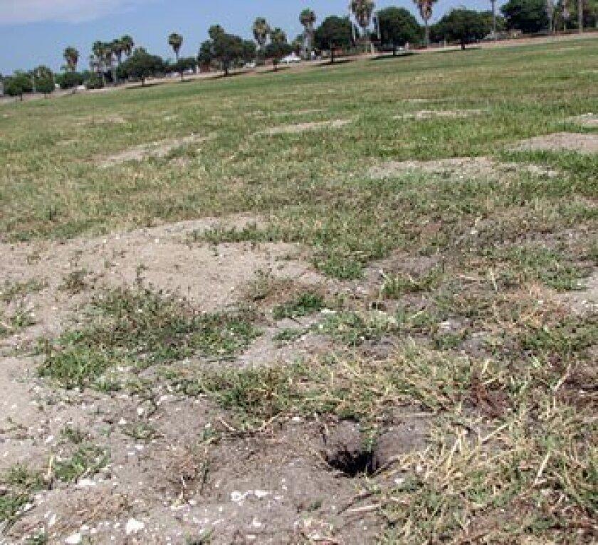 THE SITE: Robb Field, Ocean Beach