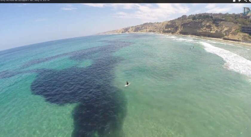 Pool of anchovies off Scripps Pier in La Jolla, July 8, 2014. SIO