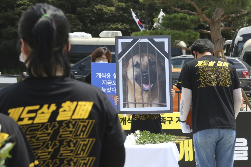 Animal-rights activists in Seoul protest dog-meat consumption