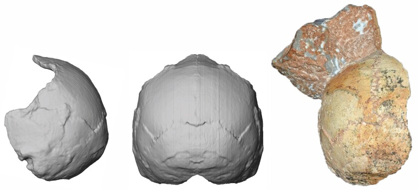 Apidima 1 cranium