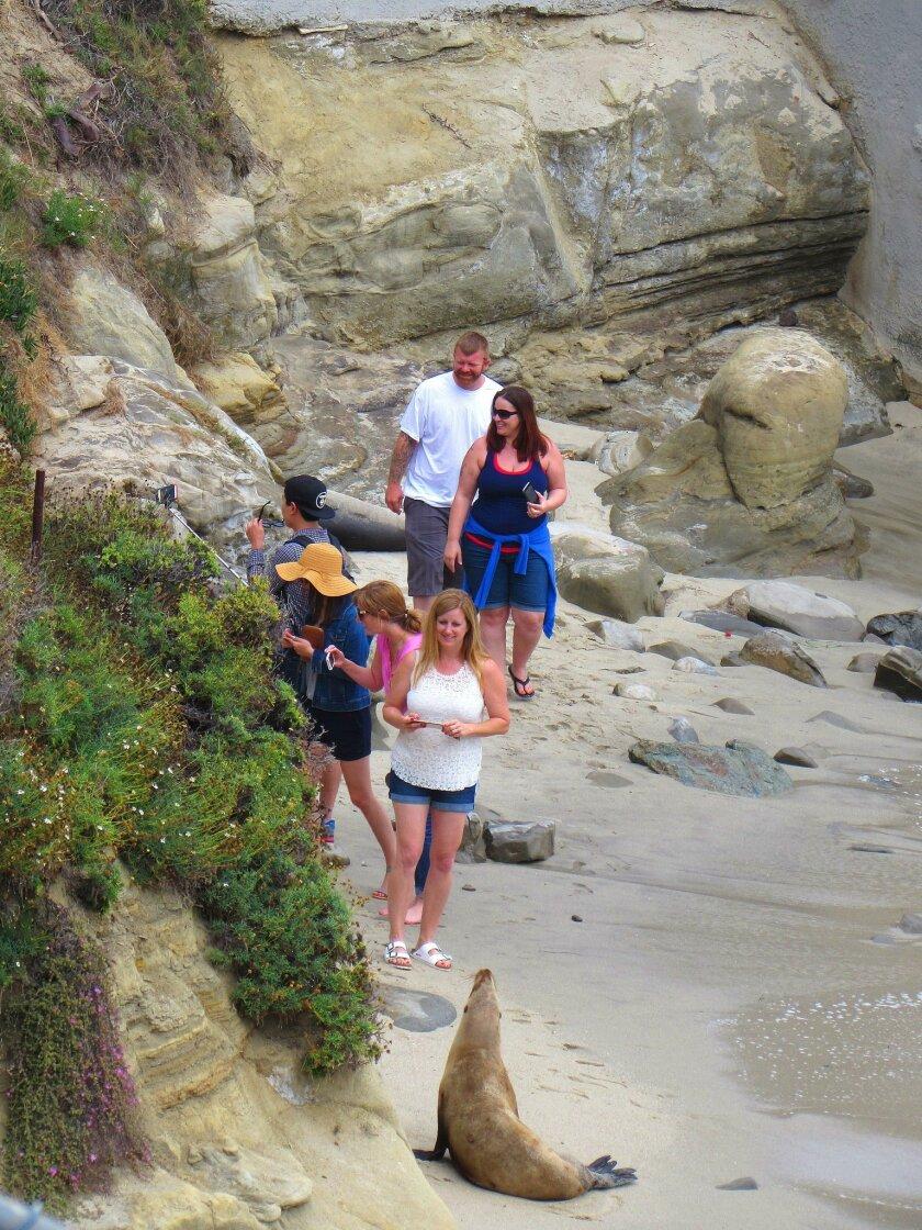 A sea lion greets visitors at the La Jolla Cove.