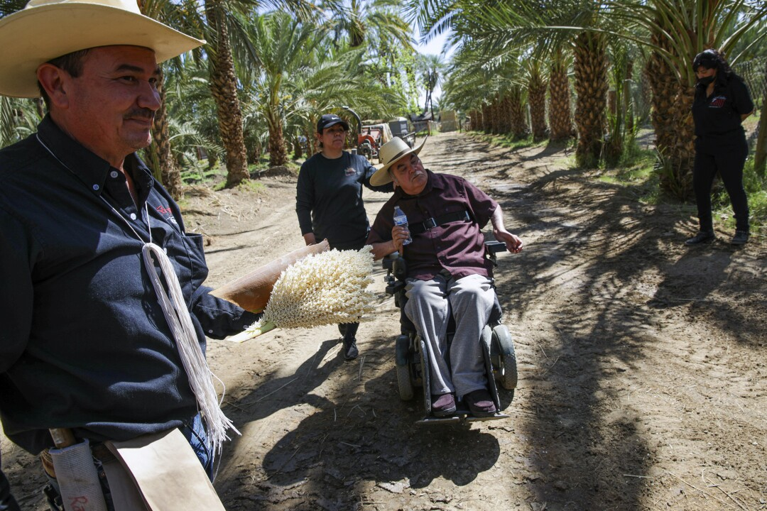 Alvaro Bautista, left, holding medjool male date palm flower, with father Enrique Bautista at family farm in Mecca.