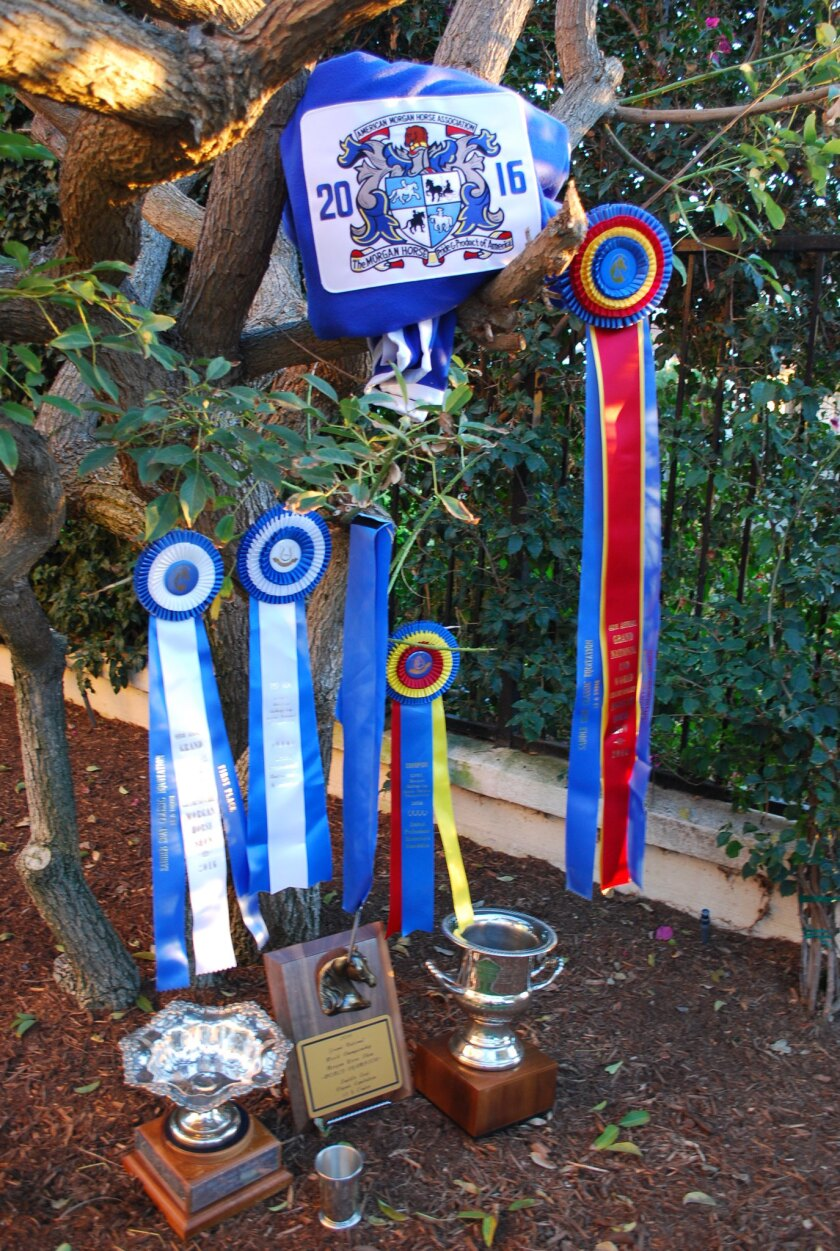 Katie Myron's awards from the 2016 Grand National & World Championship Morgan Horse Show.