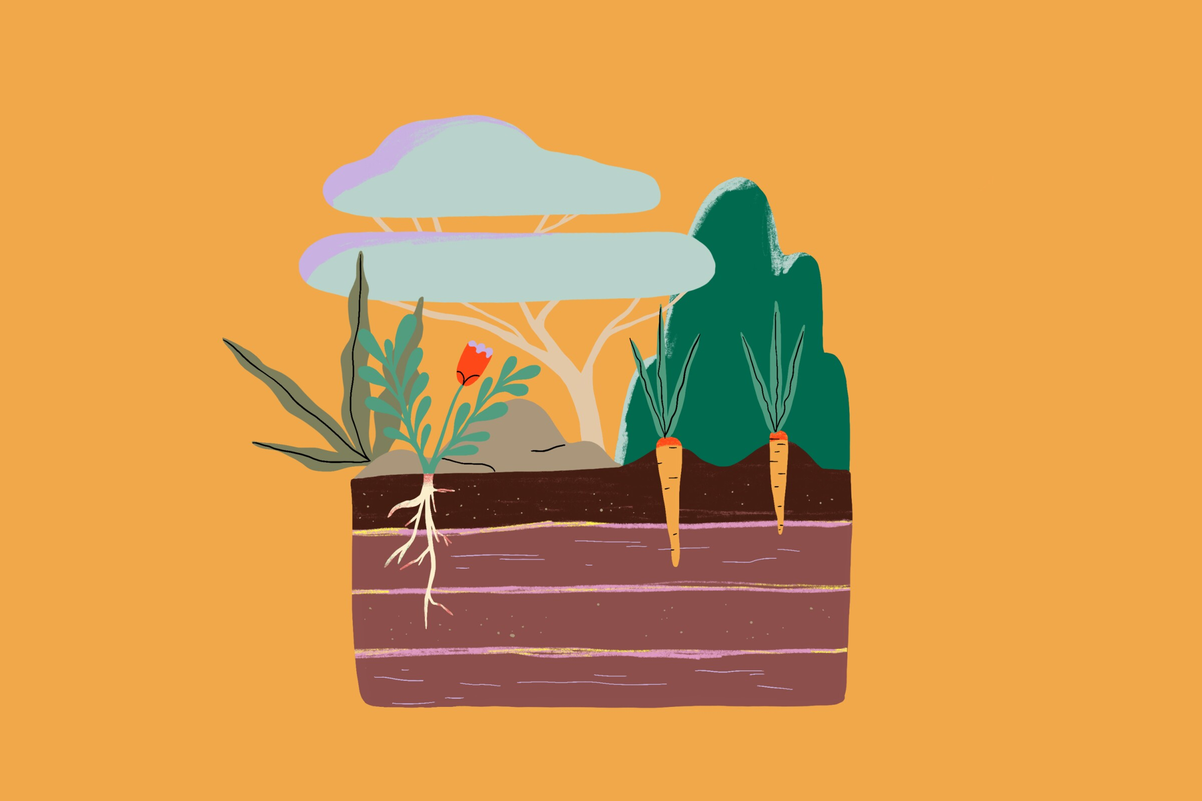 Mulch illustration