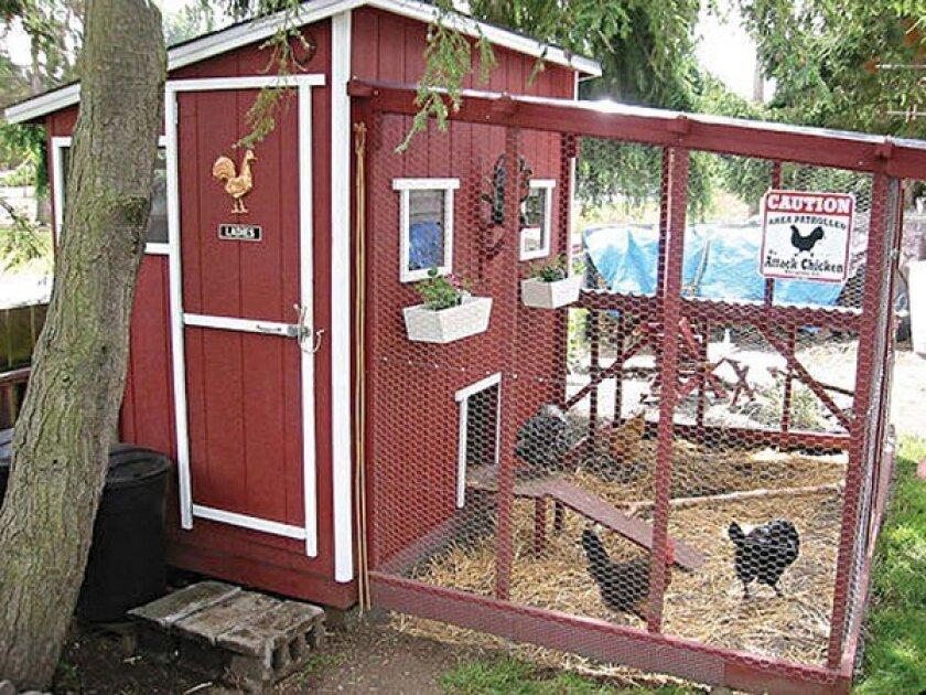 kitchenshrinkchicken-coop