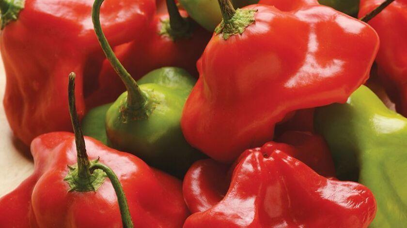 Hot Pepper 'Mad Hatter'